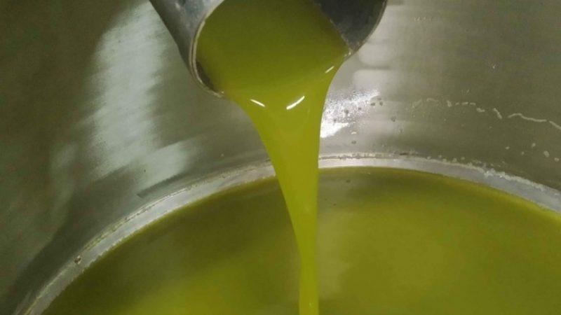 """La raccolta delle olive, una fatica che vale """"oro"""""""